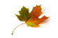 Image of a Canadian maple leaf, symbol of unity for our communities