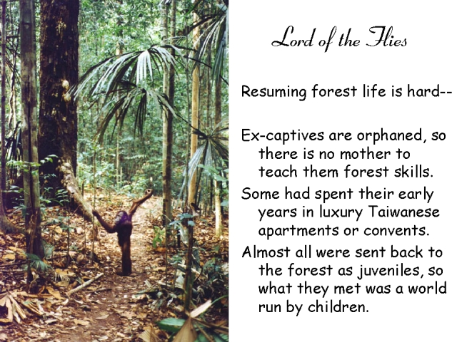 essay of lord of the flys Essay of lord of the fly's the book lord of the fly's is a story about a group of kids that get stranded on an island and have to survive by themselves as any group or tribe should, they first picked a leader.