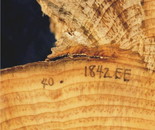 Tree ring dating techniques of fossils 5