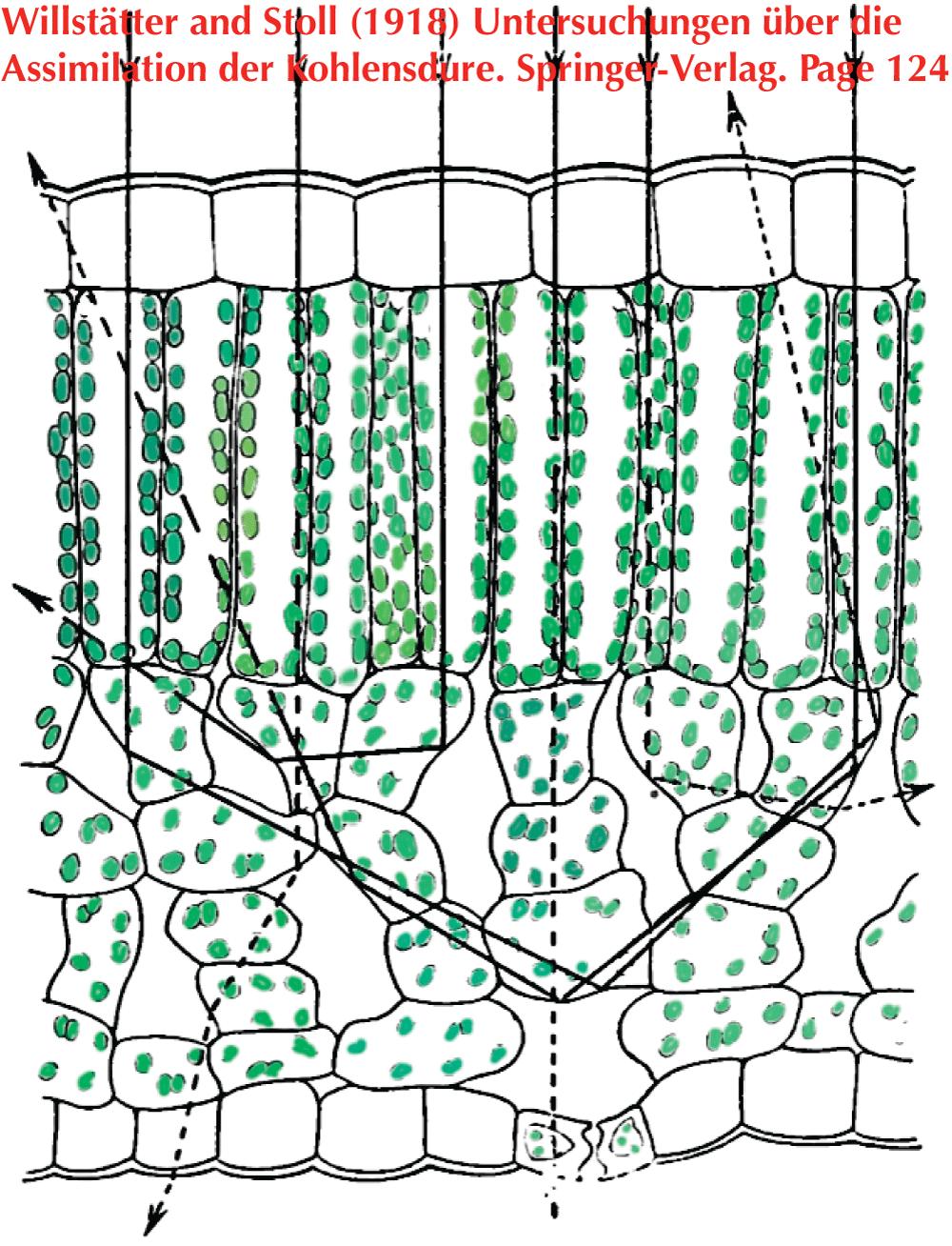 Photosynthesis Lab Manual
