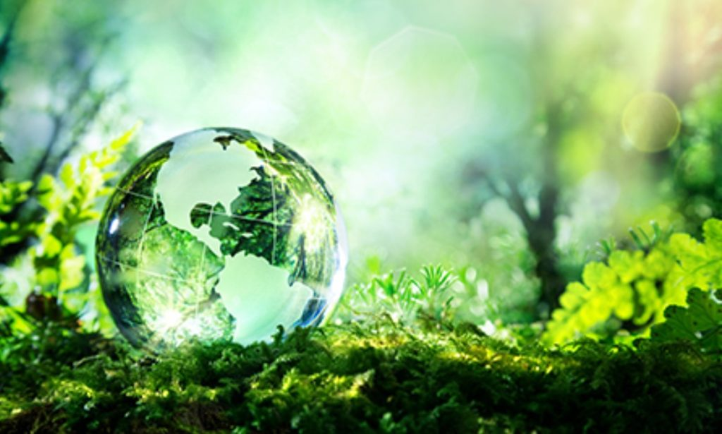 Glass globe of world, in a field of ferns