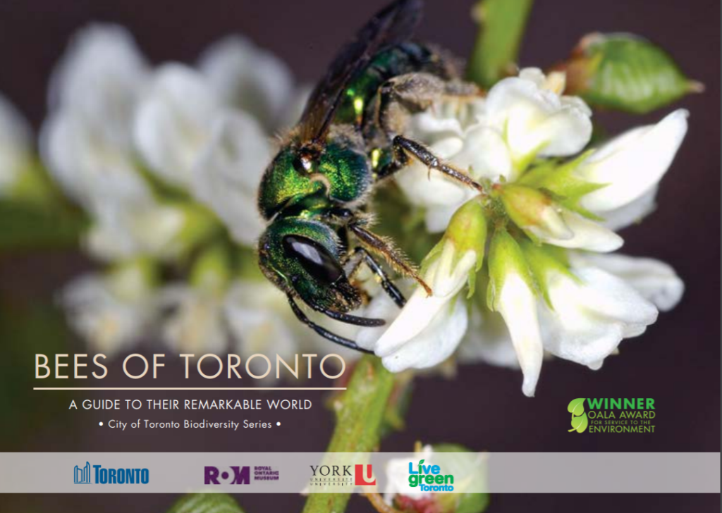 Go to the Bees of Toronto brochure