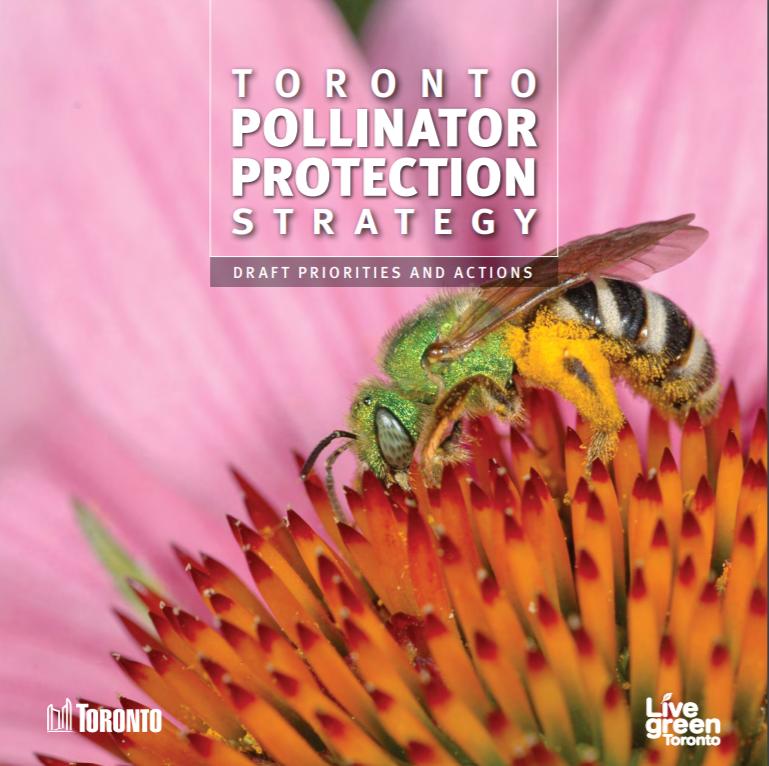 Go to the Toronto Pollinator Protection Strategy