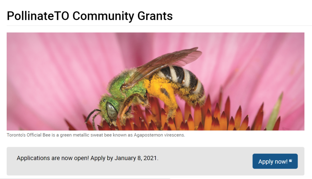 Learn more about Pollinate TO Community Grants and incentives