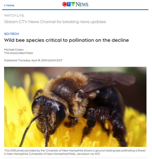 """Read the CTV News article """"Wild bee species critical to pollination on the decline"""""""
