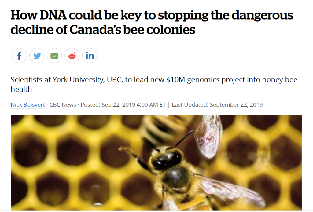 """Read CBC article """"How DNA could be the key to stopping the dangerous decline of Canada's bee colonies"""""""