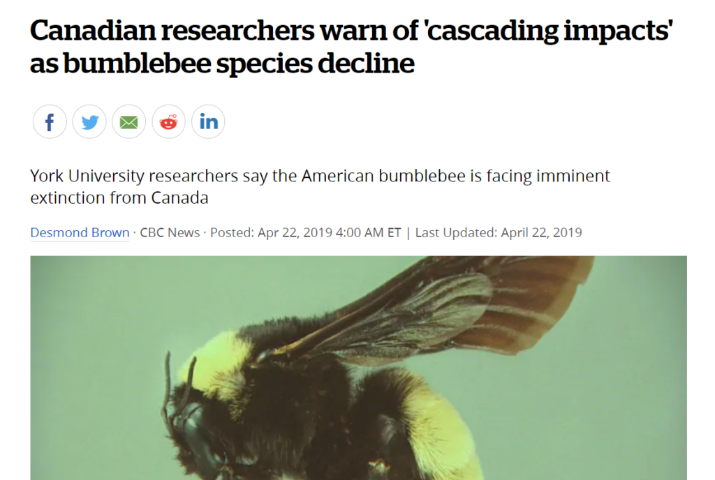 """Read the CBC article """"Canadian researchers warn of cascading impacts as bumble bee species decline"""""""