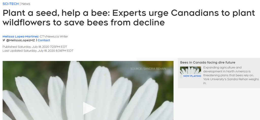 """Read the CTV news article """"Plant a seed, help a bee: Experts urge Canadians to plant wildflowers to save bees from decline"""""""