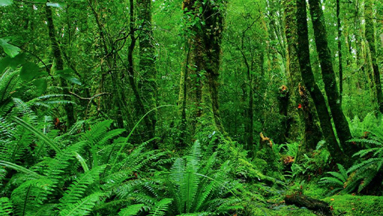 Lush green forest setting