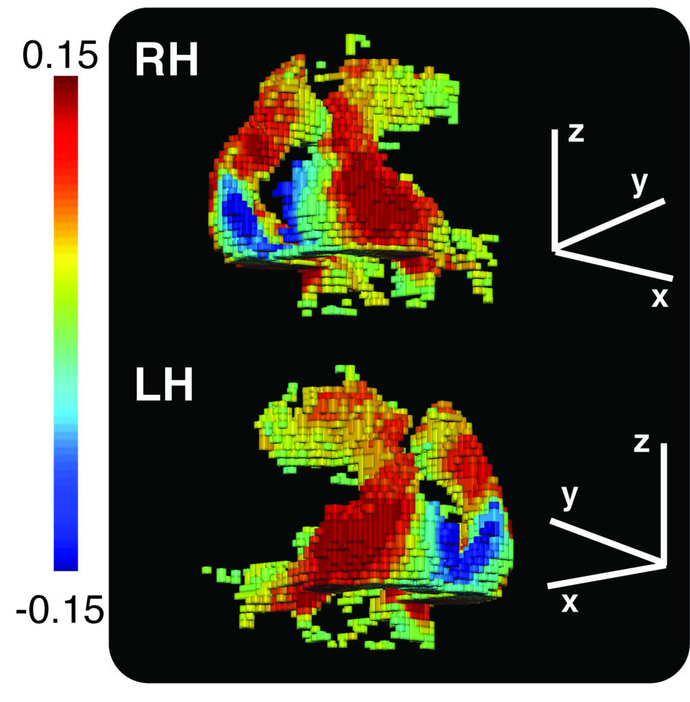 Reconstruction of voxels in brain based on their fMRI sensitivity to shape information
