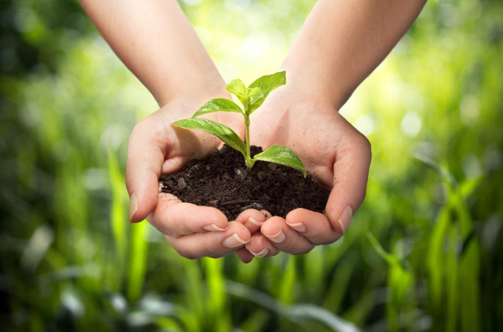 Environmental / Sustainability Education