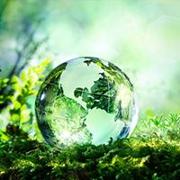 Glass globe on green grass