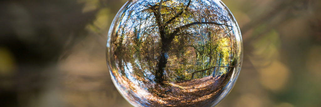 Glass sphere displaying the reflection of a tree in a forested area