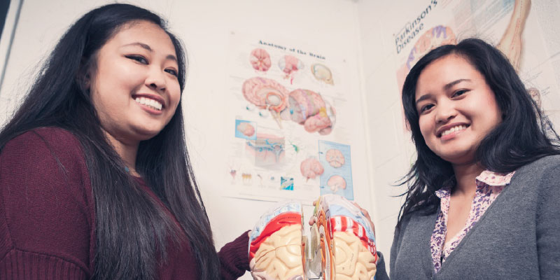 Two students standing with a model of a brain.