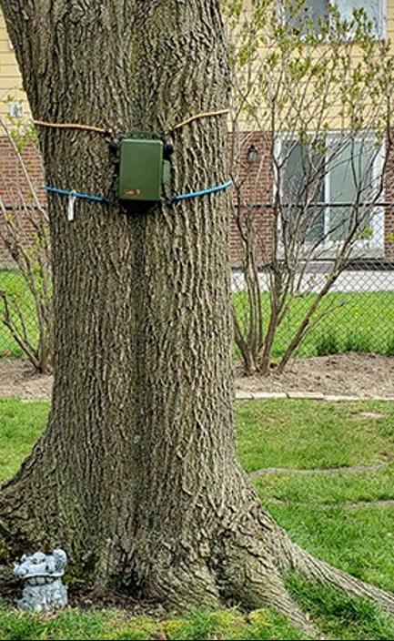 Exemple d'enregistreur bioacoustique d'oiseaux dans la cour arrière d'un étudiant.