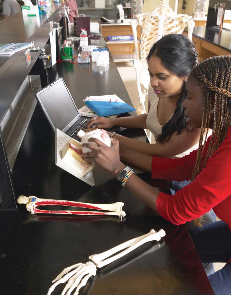 Two Kinesiology students looking at anatomical models of human bones