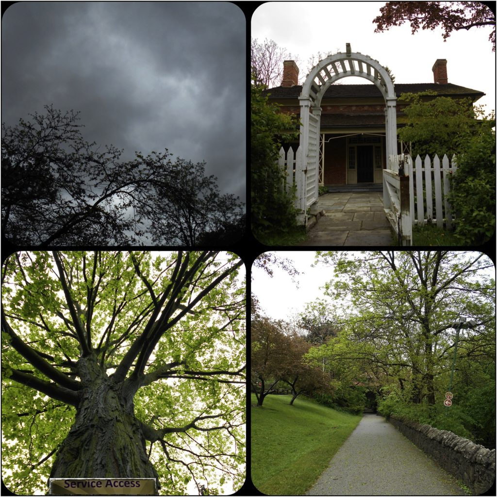 images of trees and pathways